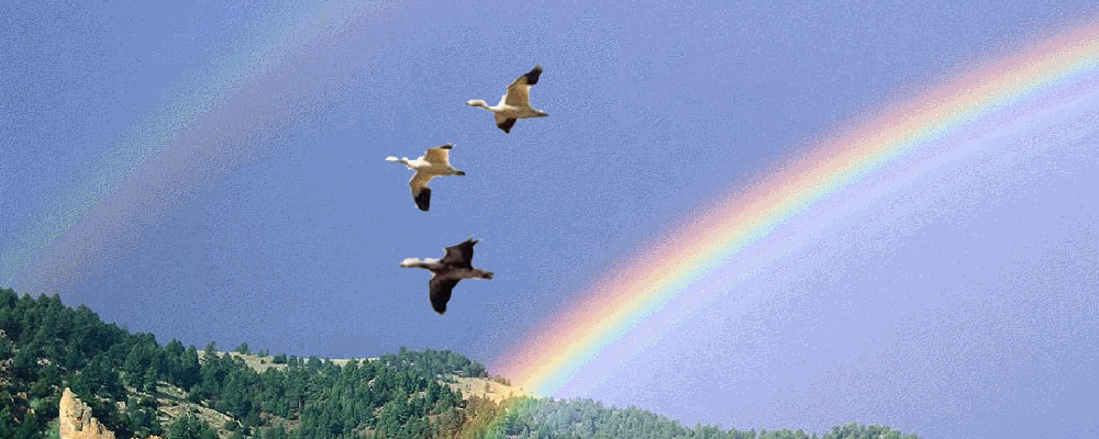 arcobaleno_gabbiani