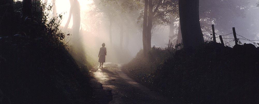 cammino nel bosco tra luci e ombre