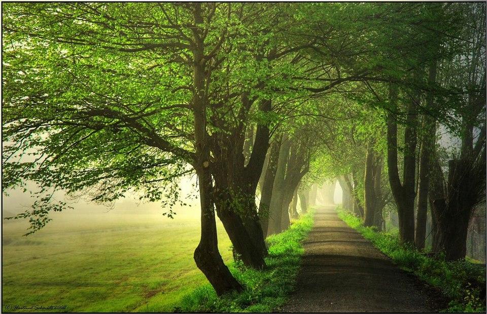 Strada nel verde e nella nebbia