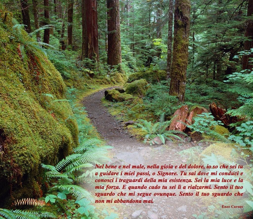 Dio guida i passi del nostro cammino