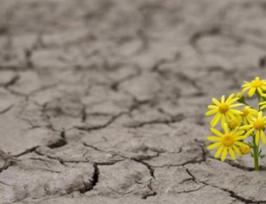 resilienza1.jpg