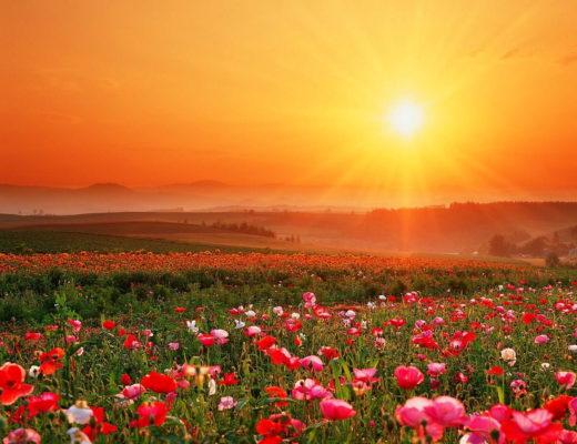 natura-fiori-campo-prato-sfondo.jpg